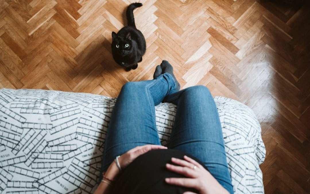 Estar embarazada y tener gato