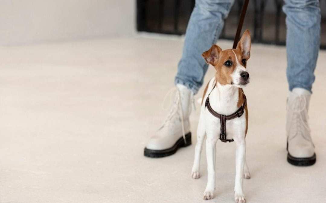 ¿Por qué los perros levantan la pata para orinar?