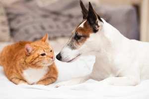 Perro gato amigos