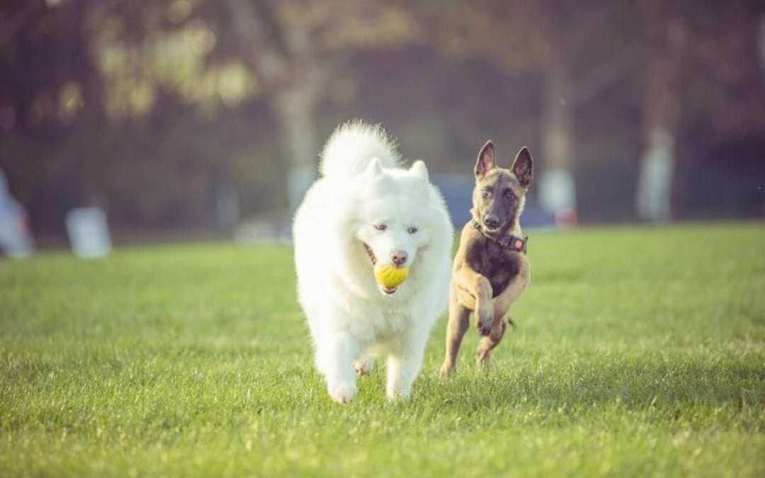 Perro hiperactivo alimento Lenda