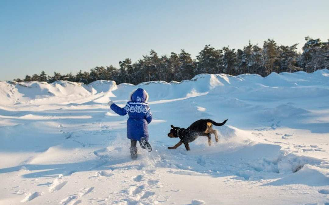 ¿Está tu perro preparado para el invierno?