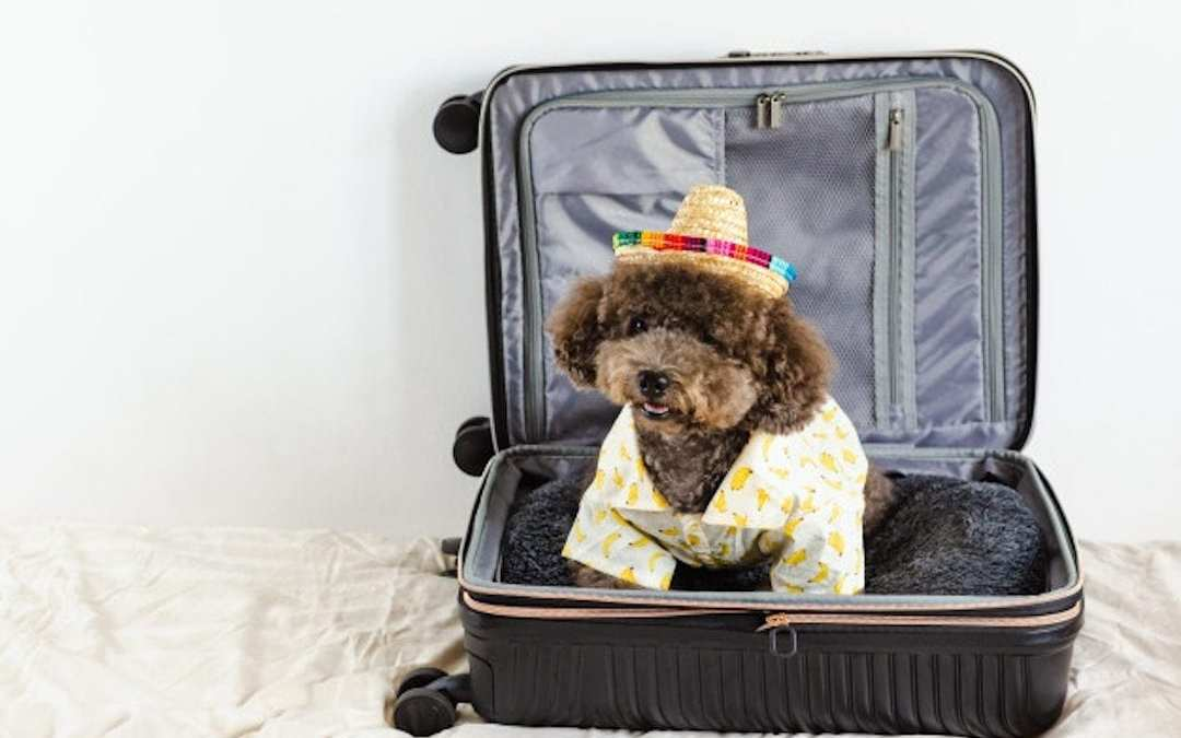 Viajar en avión con perros o gatos