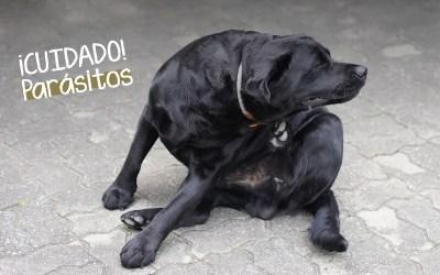 Los parásitos más comunes en perros durante el verano