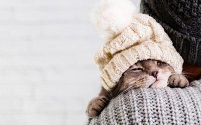📻 Cómo afrontar el cambio de estación y la llegada del frío con nuestras mascostas – Lenda en Radio Voz