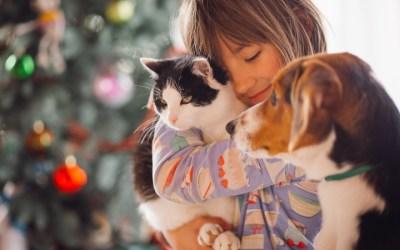 ¡Tendencias en alimentación para mascotas!