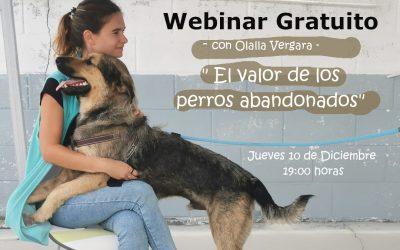 Asiste a nuestro webinar gratuito «El valor de los perros abandonados»