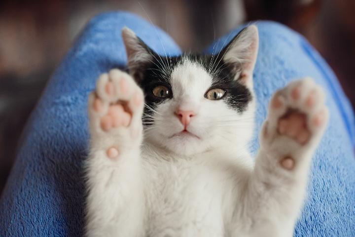 📻 La responsabilidad de regalar una mascota – Lenda en Radio Voz