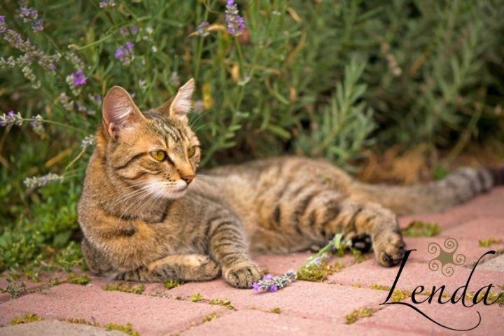 📻 Mosquitos y parásitos: amenazas para nuestras mascotas – Lenda en Radio Voz