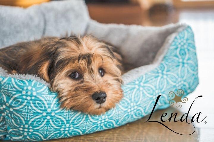 ¿Puede mi perro tener depresión?