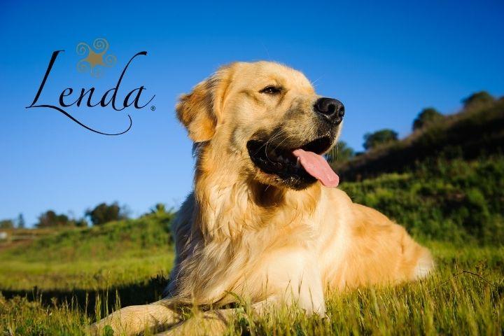 📻 La piel y el pelaje de nuestras mascotas – Lenda en Radio Voz