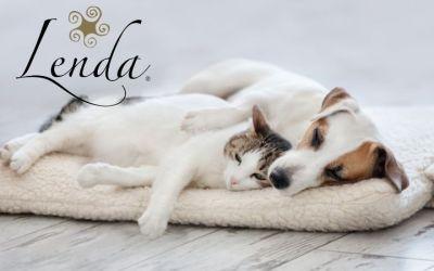 ¿Nuestras mascotas sueñan?