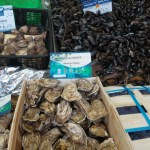 three types of mussels