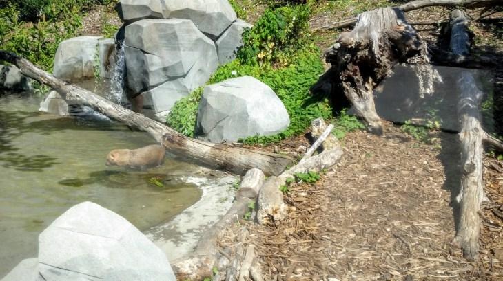 bush dog / Waldhund