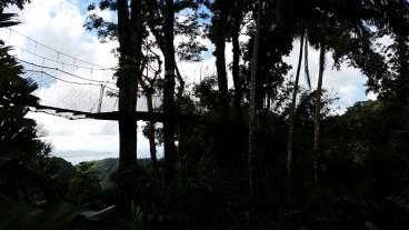 suspension bridge inside the botanical garden