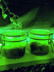 Two drinks in preserve jars brightly lit by green light