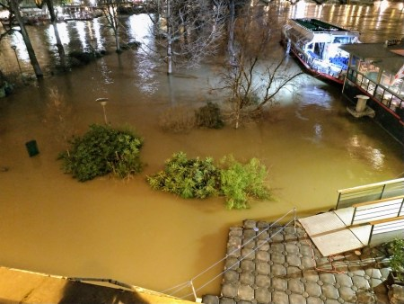ile de la cité flooded with brown water. The tops of bushes and trees stick out of the water