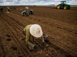 trabalhador-rural-cna