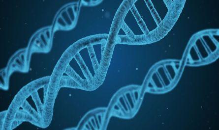 Diccionario jurídico: datos genéticos