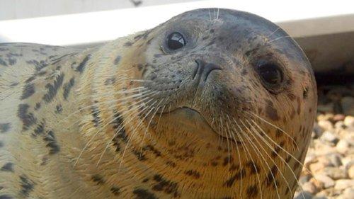 Lenie bezoekt zeehondenopvang Vladivostok