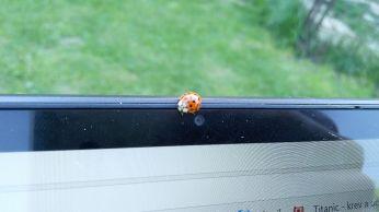 Díky berušce se můžete podívat že novinku ThinkShutter najdeme opravdu jenom u ThinkPadů