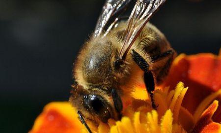 Mestské včely
