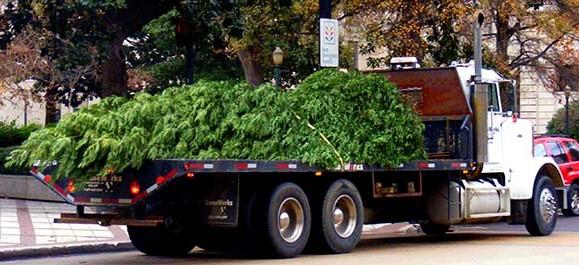 recyklácia vianočných stromčekov