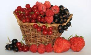 Zavarme si letné zásoby ovocia