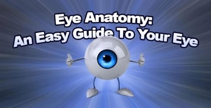 Eye Anatomy: An Easy Guide To Your Eye | Lenstore.co.uk