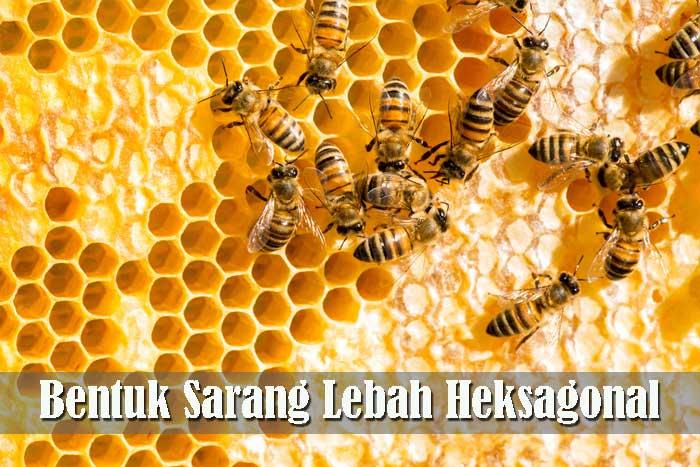 Bentuk Sarang Lebah Heksagonal