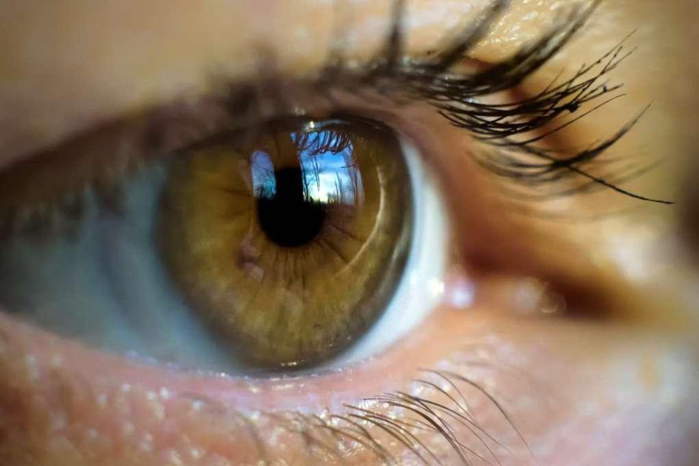 oeil lentilles