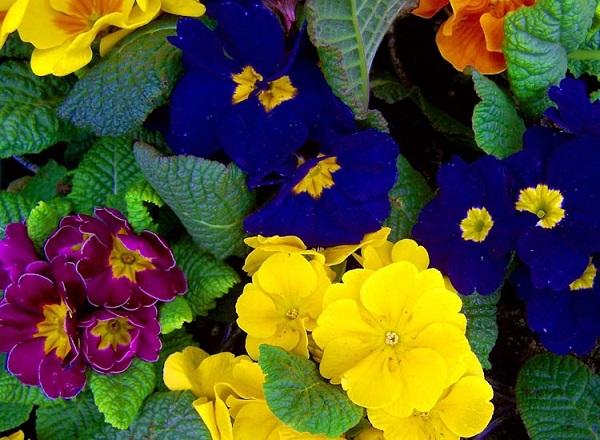 piante di primavera