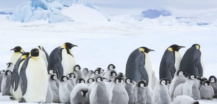 La marcia dei Pinguini: il richiamo. La nostra recensione