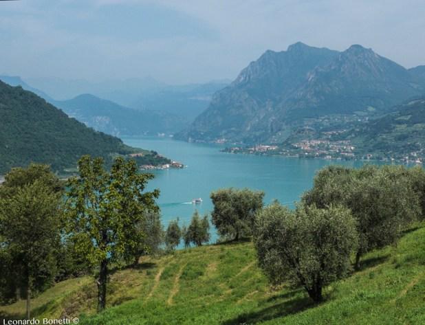 Prato misto a uliveto e il lago d'Iseo dall'alto