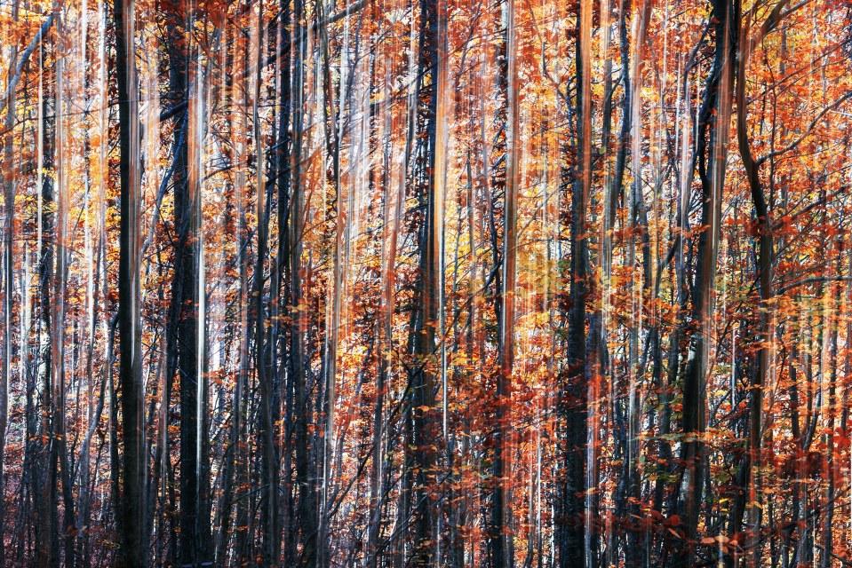 La Foresta Sfregiata