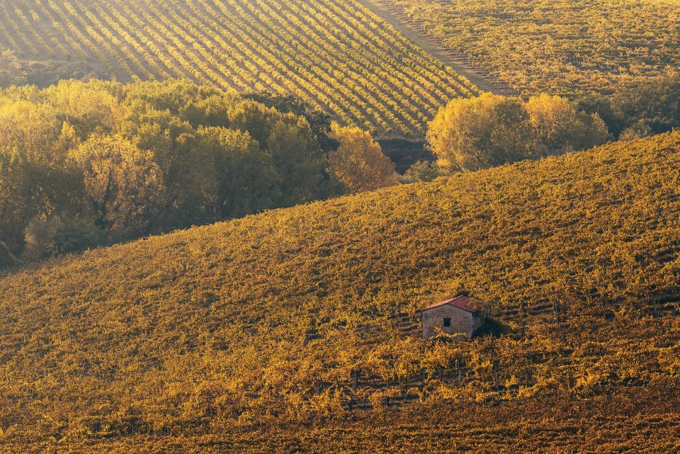 The House in the Wineyard