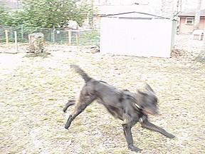Leodog1