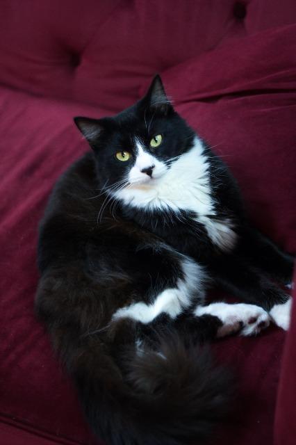 Fuzzy Wuzzy | Leon County Humane Society