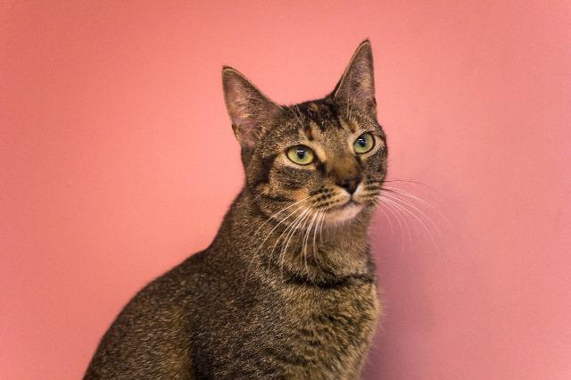 Layla | Leon County Humane Society