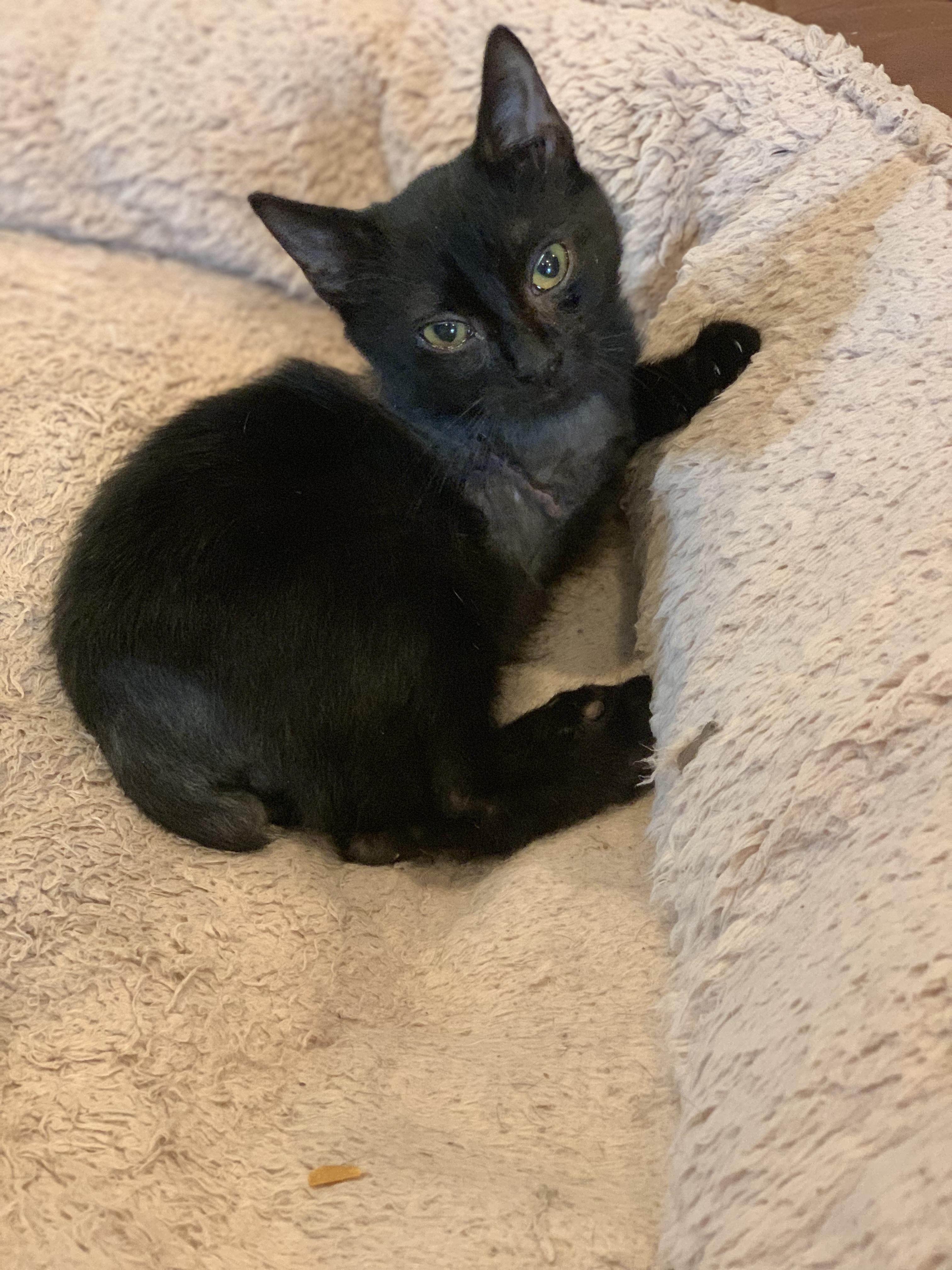 Ninja Kitty's Recovery | Leon County Humane Society