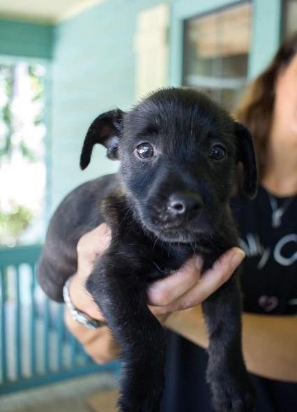 Leon County Humane Society | Rescue, Rehabilitate & Educate