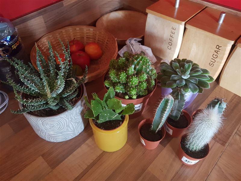 My chosen Cacti