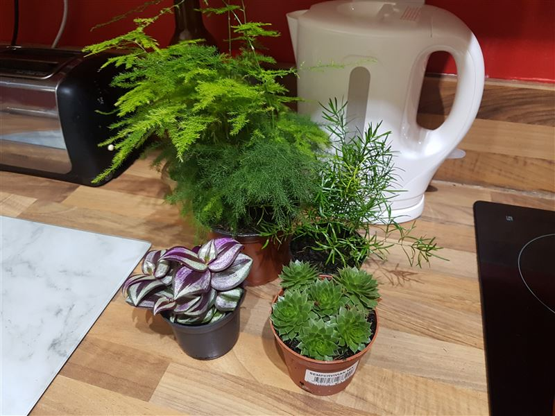 My chosen wet plants