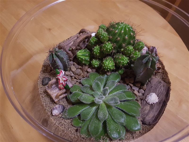 Finished Terrarium view 2