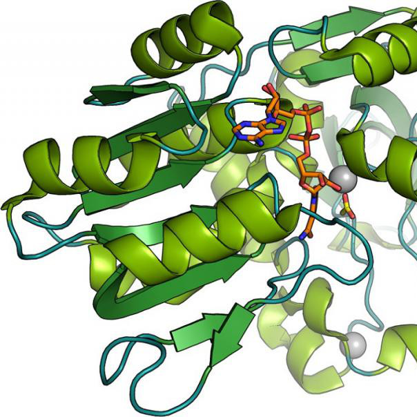 Biocatalysis and Protein Engineering