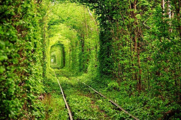 Tree Tunnel, Rivne, Ukraine