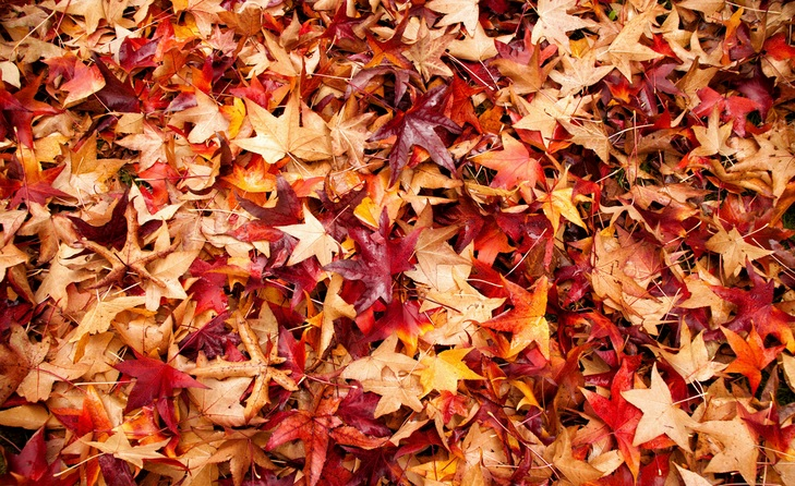 automnefeuilles