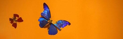 cropped-butterfly_802644i.jpg