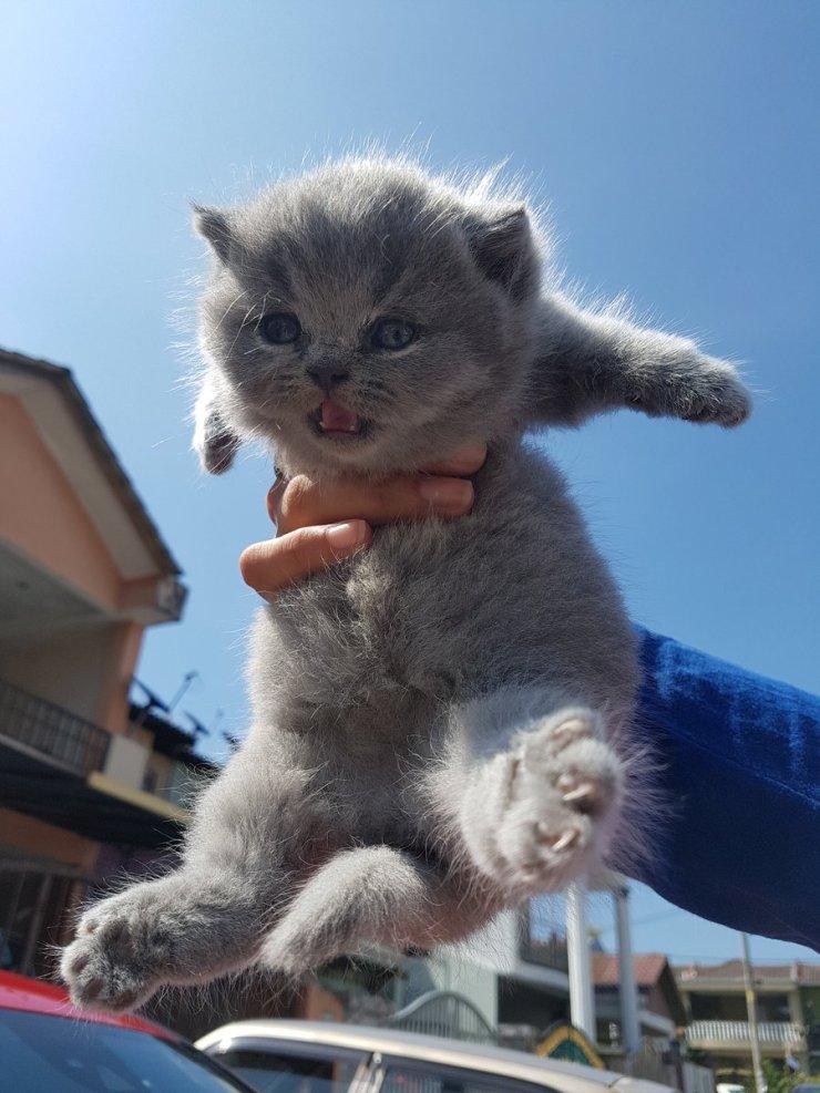 Video Cantiknyaaa Gebu Gebas Semuanya Netizen Ger4m Tengok 3 Anak Kucing Comel Berjoging Bersama Tuannya