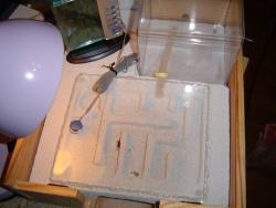 Mon projet fourmilière 2008 / 2011