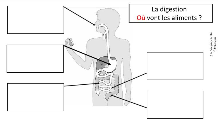 carte mentale la digestion